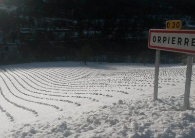 Lavandin sous la neige, Orpierre