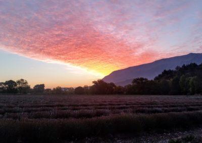 Coucher de soleil sur champ de lavande