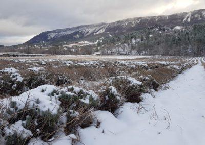 Lavandin sous la neige, le Moulin d'Orpierre