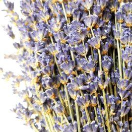 Bouquet lavande extra-bleue Lavanderaie