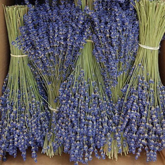 Bouquet lavande extra-bleue